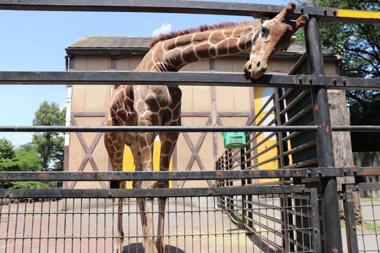 羽村 市 動物 公園
