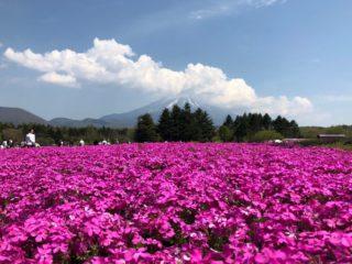 今だけの絶景!山梨「富士芝桜まつり」写真映えでスイーツも絶品♪
