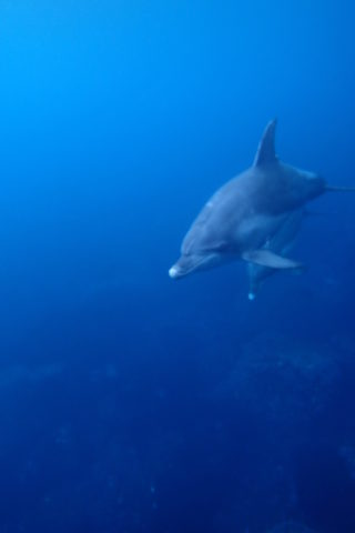 イルカと一緒に泳げる島に行ってきました~♪