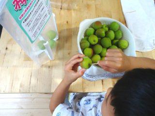 【梅仕事】親子で簡単キット使って「梅シロップ」作りに挑戦!