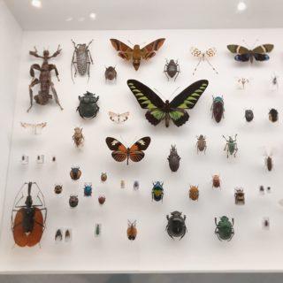 虫まみれな展覧会!「虫展」は見て、作って、楽しい仕掛けがたくさん!