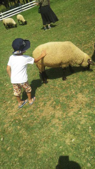 【岐阜県郡上市】1日遊べる牧場「牧歌の里」に行ってきました~!