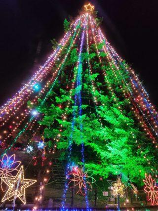 巨大ツリーとイルミネーションに感動!宮ヶ瀬クリスマスみんなのつどい