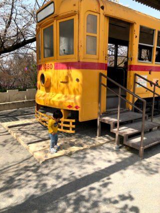 春の子連れおでかけ!飛鳥山公園で電車とお花見ピクニック